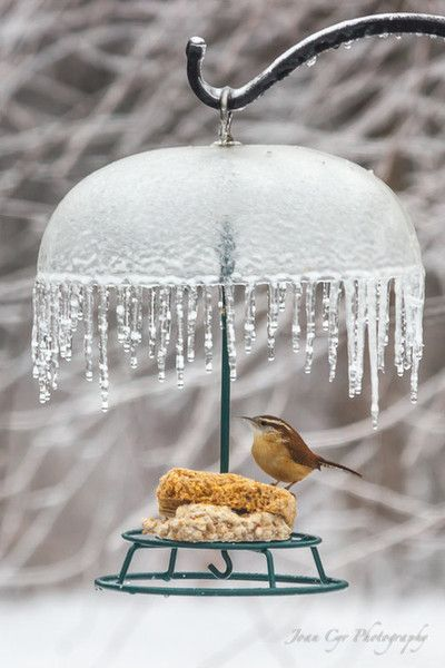 Importance of Feeding the Birds in Winter … More More