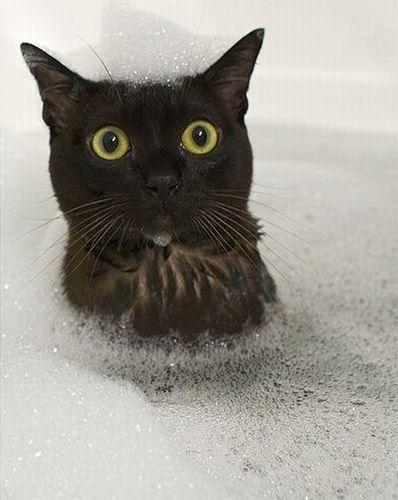 黒猫入浴中