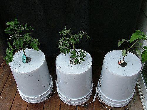Огород вверх тормашками или выращивание растений в перевернутом виде
