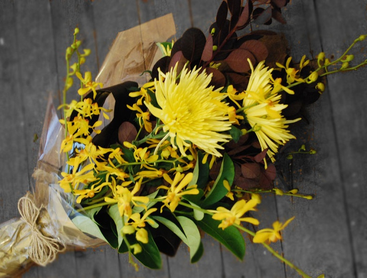 chrysanthemum :: spider orchid :: smokebush