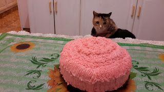 Cats of Claridge: Blitzy's 4th Birthday :)