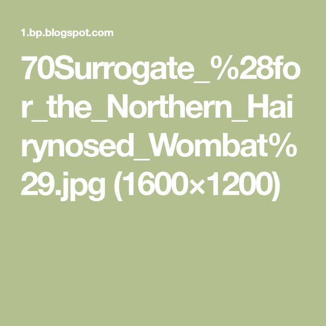 70Surrogate_%28for_the_Northern_Hairynosed_Wombat%29.jpg (1600×1200)