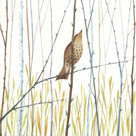 Alex Burnett - Song Thrush.jpg