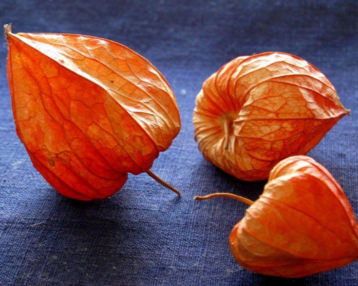 ゴールデンベリー(ほおずき)効能・効果と食べ方 | スーパーフード《Super Foods》 食用ほおずきの実を完熟させた、タンパク質が豊富なベリー「ゴールデンベリー」。ゴールデンベリーには、老化防止(アンチエイジング)やデトックス効果に期待できるたくさんの栄養素が含まれています。皮膚や粘膜を作り出す成分で、健康的なお肌へと導き出してくれ、肝臓にもよく、体内に不要なものを溜め込まない働きのある栄養素が含まれています。