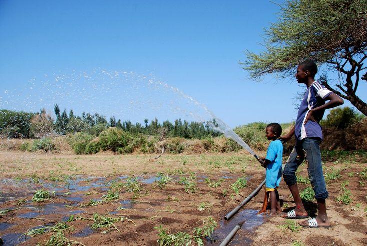 Fotos: Cuando el verde se impone al Sáhara | Planeta Futuro | EL PAÍS