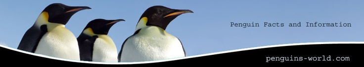 Adelie Penguins in Antarctica with Jean Pennycook video  & other videos!