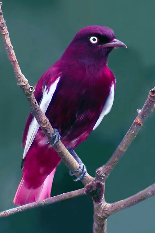 Such a pretty plum coloured bird!