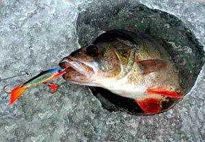 Рыбалка видео: Ловля окуня зимой на балансир