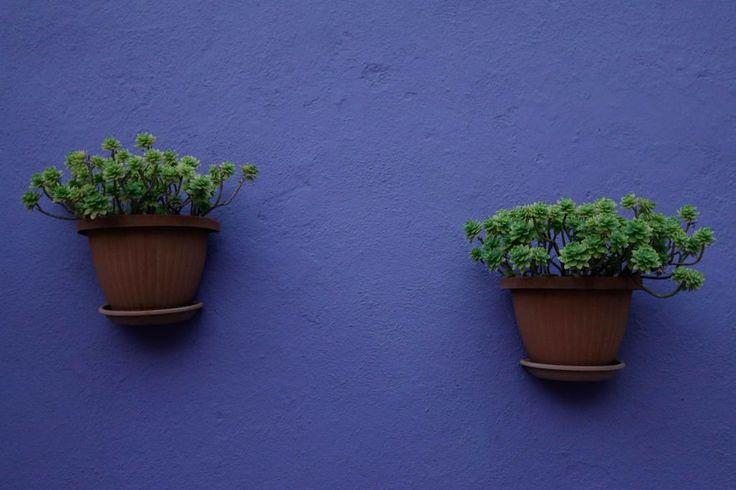 Il lilla segnaletico di una facciata di #Burano si rafforza con il verde delle piante grasse