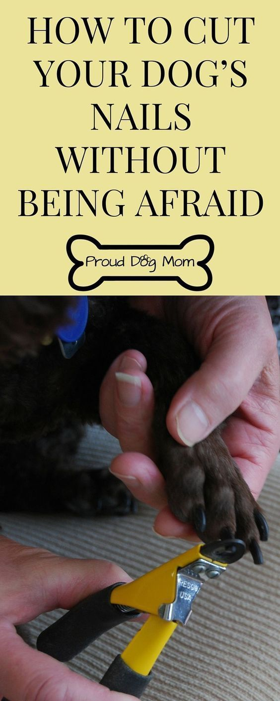 Dog Nail Trimming Tips: How To Cut them Without Being Afraid of Hurting your fur baby!. Use these dog grooming tips at home & save money -- Repin to your own inspiration board