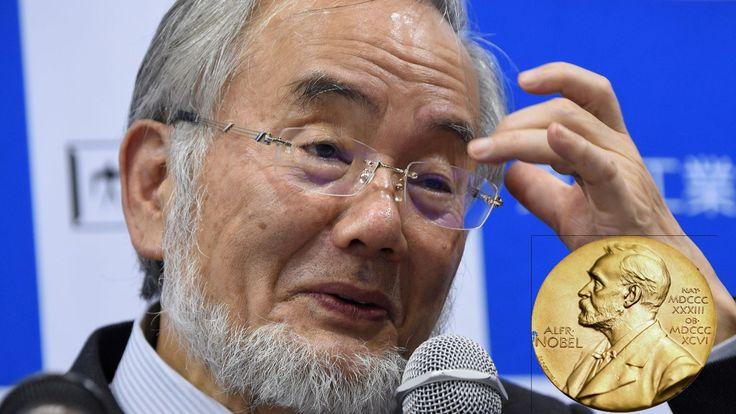 Cette année le prix de Nobel de médecine a été remis au Dr. Yoshinori Ohsumi afin de récompenser ses découvertes sur le système de recyclage de nos cellule