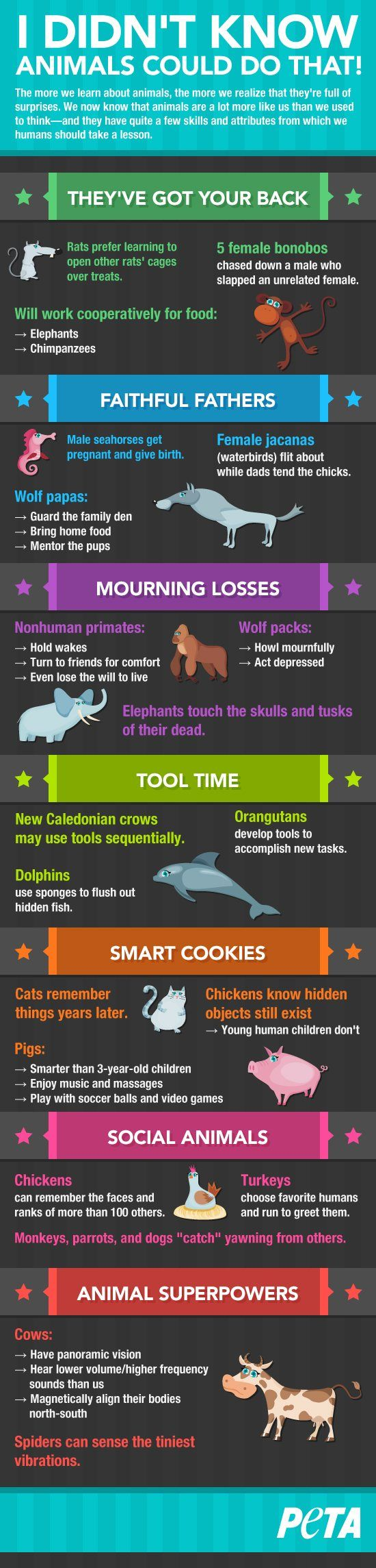 The following graphic shows some of the things that we have in common with our animal friends—and some of the differences that humans can only envy.