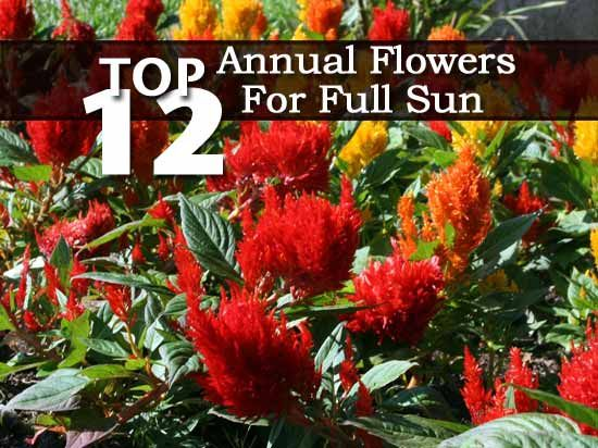 1000 ideas about full sun garden on pinterest full sun for Landscape plants for full sun
