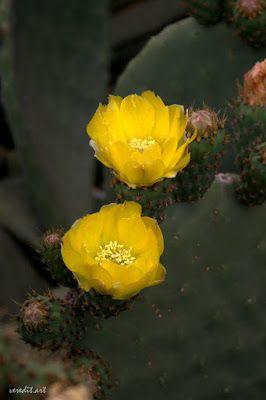 Kinder-Gedichte-Welt: Die Kaktusblüte
