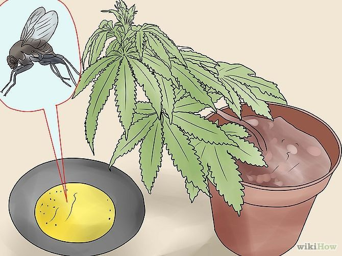 How to Use Home Remedies to Get Rid of Gnats
