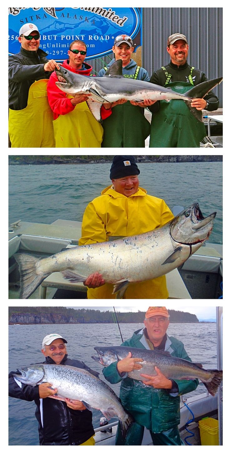 57 best sitka fishing reports images on pinterest for Sitka fishing report