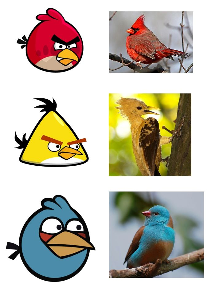 Here's what Angry Birds might look like in real lifeBirds Lol, Funny Pics, Real Life, Funny Pictures, Life Angry, Funny Stuff, Real Angry, Real Birds, Angry Birds