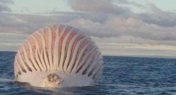 Αυστραλία: Ψαράς εντόπισε «Άλιεν» στον Ινδικό Ωκεανό [Βίντεο]