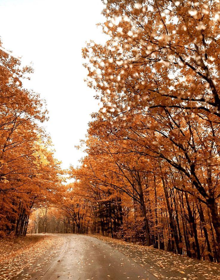 Acadia Maine, Bangor Maine, Acadia National Park, National Parks, Boston In The Fall, Mount Desert Island, New England Fall, Culture Travel, Travel Usa