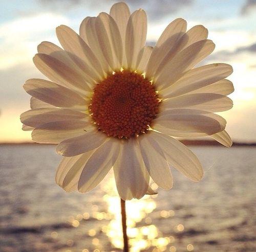 A kép legnépszerűbb címkéi között van: flowers, sun, sea, daisy és summer