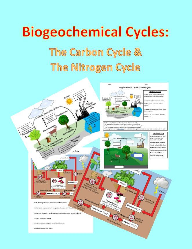 Biogeochemical Cycles Nitrogen Cycle Carbon Cycle Biology Lessons