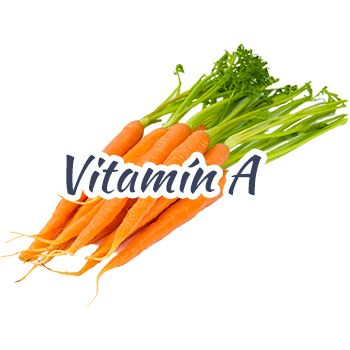 mrkva-vitamina