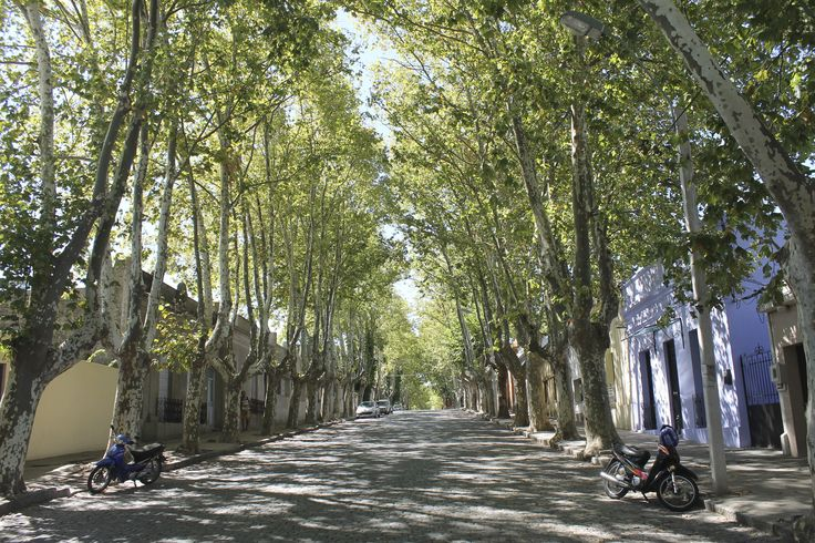 Street scene with trees in Colonia, Uruguay