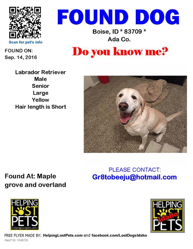Craigslist Boise Missing Pets