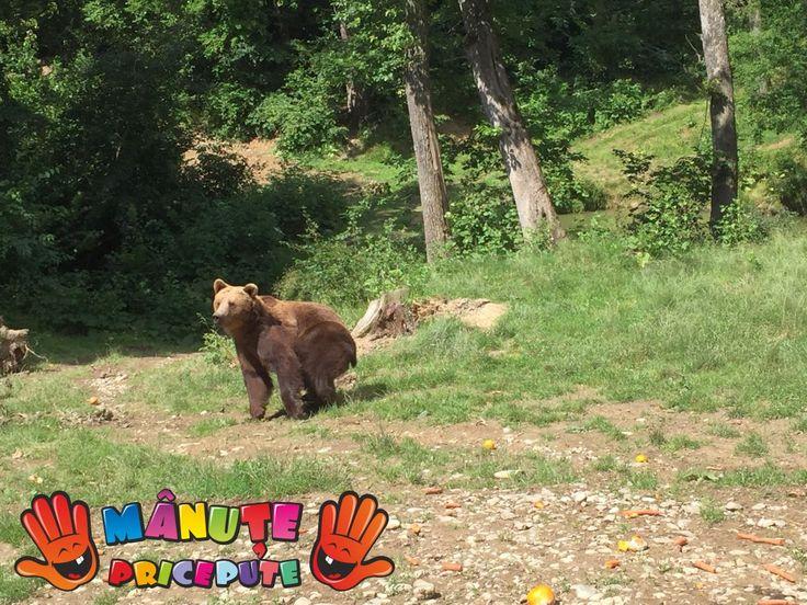 O lecție de viață la Sanctuarul urșilor din Zărnești - Manute Pricepute