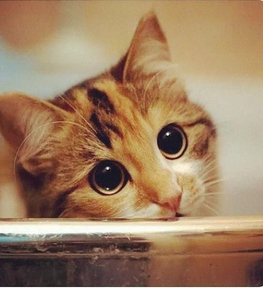 Eye Infection in Newborn Cats petMD