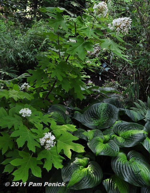 37 best images about garden shades of green foliage on pinterest gardens maidenhair fern. Black Bedroom Furniture Sets. Home Design Ideas