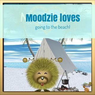 Moodzie loves the beach