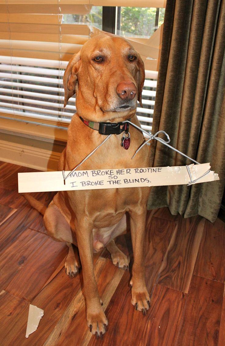 Dog Shame - LOVE!: