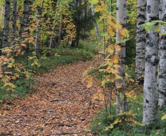 Puiden vihreässävarjossa, metsän väen valtakunnassa tapahtuu jännittäviä asioita.Vihreälakkiset metsätontutja puissa asuvat keijukaiset ovat kertoneet kautta aikojen metsän salaisuuksia satujen kirjoittajille. Kun kuljet metsässä ja olettarkkaavainen, voit itsekin kuulla metsän puiden suhisevantarinoitaan sinulle. Tässä tehtävässä on kaksi osaa: metsäsadunlukeminen ja oman metsäsadun sepittäminen.