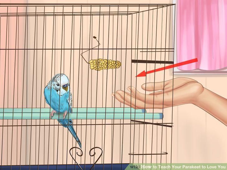 Teach Your Parakeet to Love You.