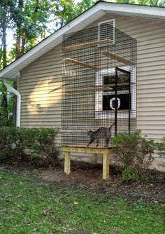 Great and safe idea instead of letting your cat roam out and about