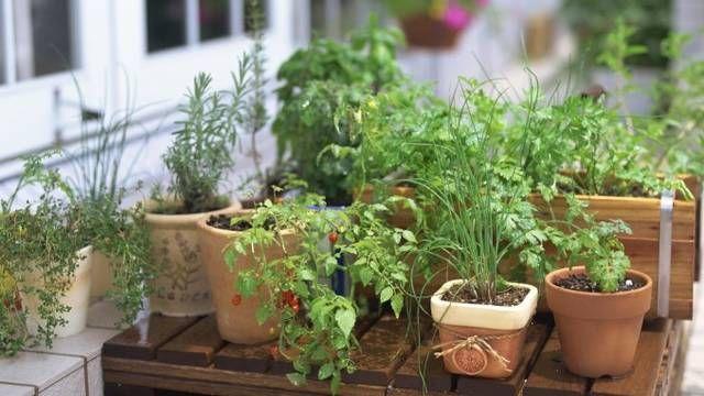 Tri spôsoby skladovania byliniek - Pluska.sk