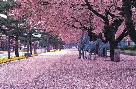 日本の桜、絶景スポット_中国網_日本語