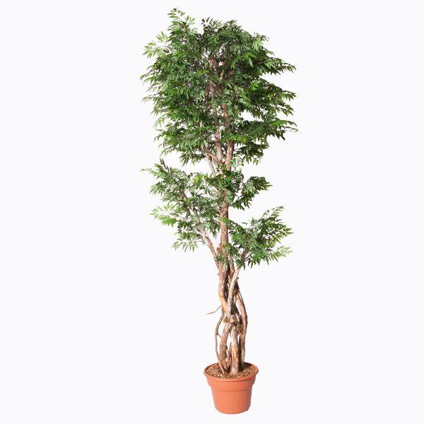 16 best plantes exotiques artificial exotic plants for Plante interieur exotique