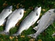 Fishing in Kenai