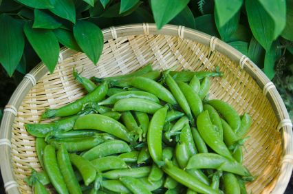RECIPE: Fermented snow peas and cucumbers, from Preserving Food Without Freezing or Canning by Gardeners & Farmers of Terre Vivante. - See more at: http://www.chelseagreen.com/content/lacto-fermenting-vegetablesa-faster-way/#sthash.emKfzPk2.dpuf