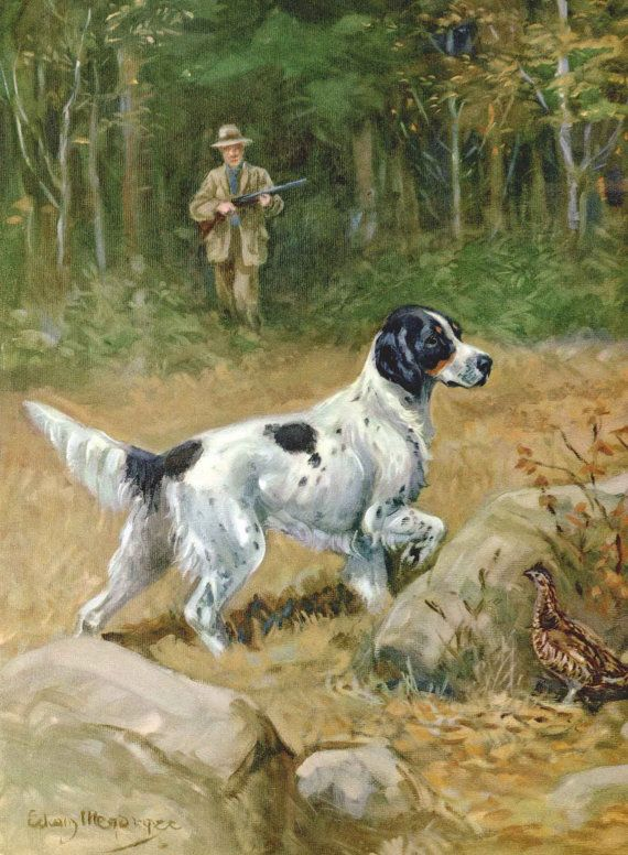 English Setter Vintage Dog Illustration  Edwin by RoxyRani on Etsy, 8x11, $16.00