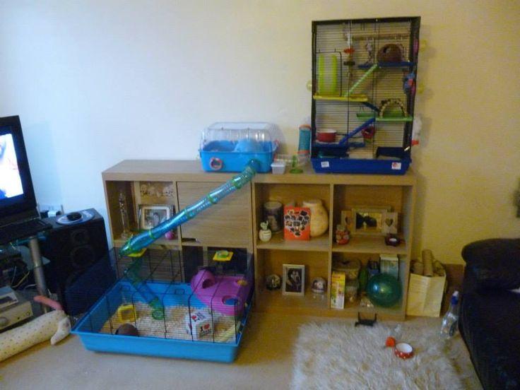 Ferplast hamster cages