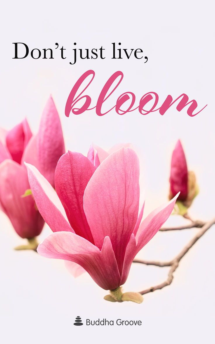 Inspiration For Bloom Bloom Quotes Flower Quotes Beautiful Flower Quotes