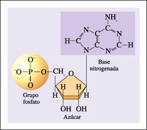 GRUPO FOSFATO: El grupo fosfato es un ion poliatómico de fórmula empírica PO43− y una masa molecular de 94,97 daltons; está compuesto por un átomo central de fósforo rodeado por cuatro átomos idénticos de oxígeno en disposición tetraédrica. El ion fosfato tiene una carga formal negativa y es la base conjugada del ion hidrogenofosfato HPO42−, que a su vez es la base conjugada del ion dihidrógeno fosfato H2PO4−, a su vez base conjugada del ácido fosfórico H3PO4. Es una molécula polivalente (el…