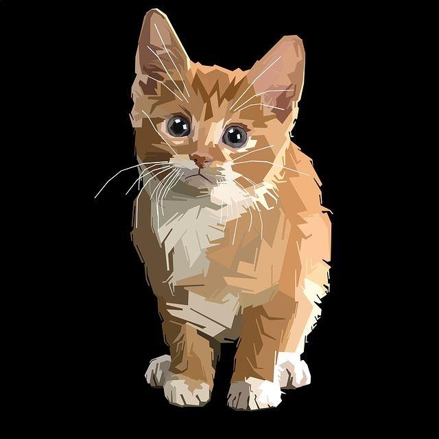 Free Image on Pixabay - Cute, Pet, Little, Cat, Animal ...