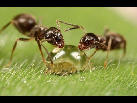 Поилка для мурашей