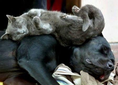 associazione alex: Animali: divertenti pose nel sonno