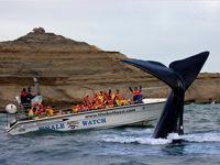 Excursion de avistaje de Ballenas Whale watch tour  Salidas diarias / Daily tours  #Ballena #PuertoPiramides #PeninsulaValdes #Patagonia #Chubut #PuertoMadryn #whale