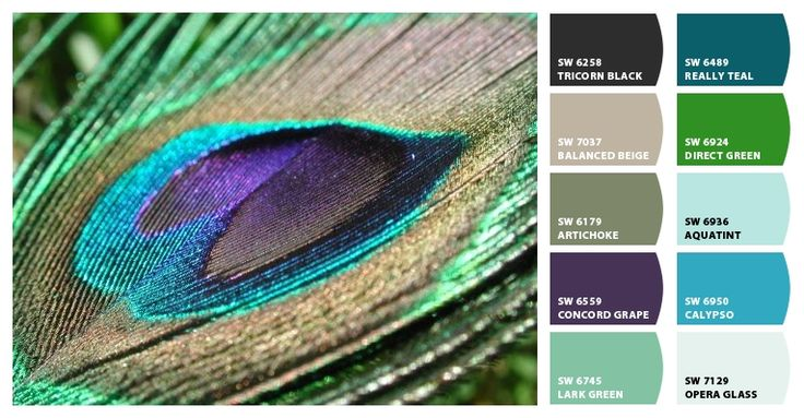 25 b sta id erna om peacock colors p pinterest for Best peacock blue paint color